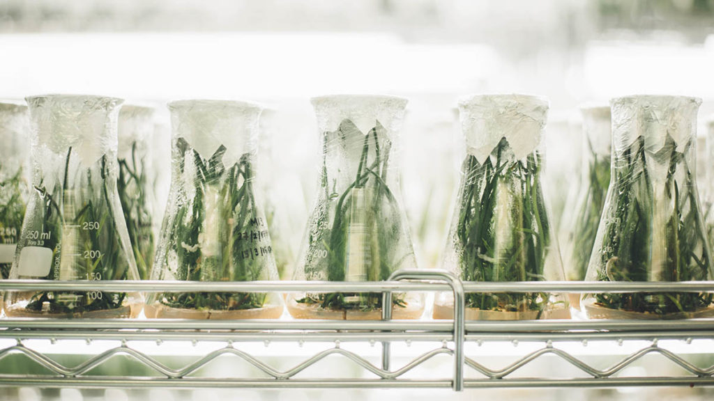 Plants in jars
