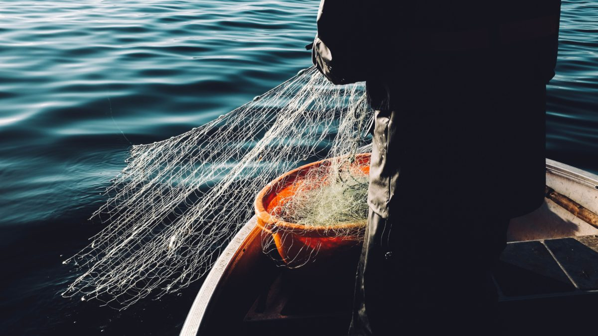 fishing seafood and aquatic food